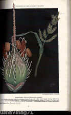 National Geographic, June 1921,Familiar Grasses & Their Flowers in Color