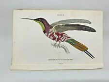 1st Ed Hand-colored Jardine's Natural History 1834 - Pella Hummingbird - 24 & 25
