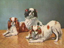 CAVALIER KING CHARLES TOY SPANIEL DOG GREETINGS NOTE CARD CUTE DOGS AT PLAY