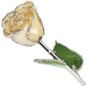 Lacquer Dipped Silver-Tone Trimmed White Rose