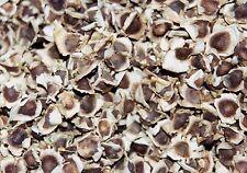 *30 fresh Seeds*Moringa Oleifera*Miracle Tree*Horseradish*free shipping*