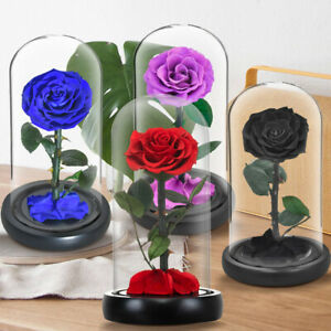 Eternal Real Rose Preserved Flower The Little Prince In Dome Gift For Girlfriend