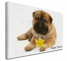 More details for 'happy easter' shar-pei dog x-large 30