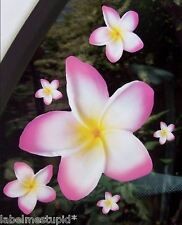 20 WHITE/PINK EDGE Frangipani Decal Car Plumeria Flower