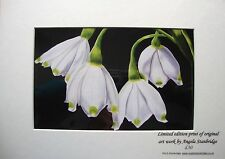 Snowdrops-Impresión de Arte Original-Edición Limitada-montado