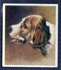 OTTERHOUND - Original 1930's Illustrated Cigarette Card