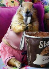 Prairie Dog Eating Chocolate Ice Cream Humorous Funny Valentine's Day Card
