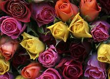 ROSES - BRITISH FLOWERS SERIES - MOUSE MAT / PAD #1