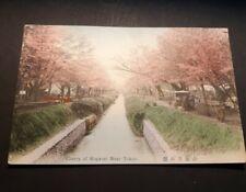Vintage Japan Postcard - Cherry of Koganei nr Tokyo