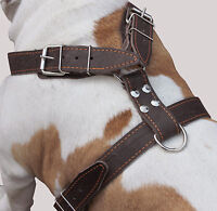"Genuine Leather Dog Harness 35""- 40"" chest size Great Dane Cane Corso Mastiff"