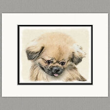 Pekingese Dog Original Art Print 8x10 Matted to 11x14