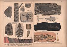 1878 lithographie originale fossiles fougère poisson lepterpeton plante géologie