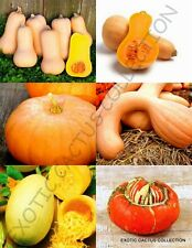 Pumpkin Mix, squash vegetable organic fruit exotic edible garden seed 15 seeds