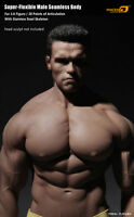 1/6 Phicen  Male Muscular Body 12in Tbleague M34 PL2016-M34 BW/Neck