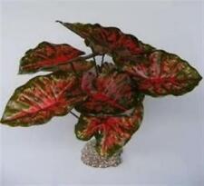 "Aquarium Plant Artificial Red And Green Leaf Casia 16"" Fake Silk Decoration"