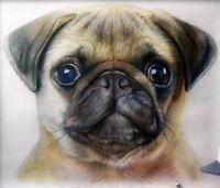 Ritratto portrait di CARLINO (dog) - Matite colorate cm. 50 x 60