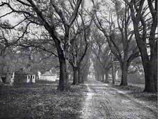 L'Eremo piantagione SAVANNAH Georgia 1900 BW foto STAMPA POSTER 1995bwb
