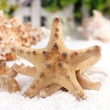 2Pcs Natural DIY Starfish Sea Star Miniature Aquarium Ornaments Craft Decor New