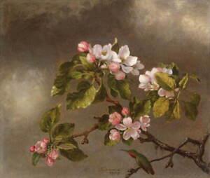 Martin Johnson Heade Hummingbird and Apple Blossoms Giclee Paper Print Poster