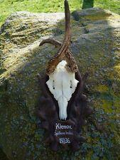 ANTIQUE BLACK FOREST ROE DEER ANTLERS-ART DECO-WOOD CARVING-HAND CARVED PLAQUE-