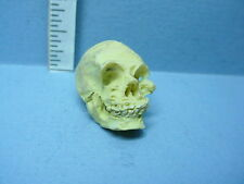 Dollhouse Miniature Human Skull Falcon Miniatures #A4443- 1/12th Scale Resin