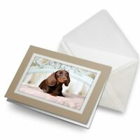 Greetings Card (Biege) - Pampered Dachshund Puppy Dog  #21440