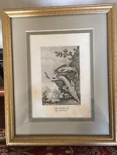 "Framed 1805 Copper Plate Engraving "" The Sturgeon/Mystus """
