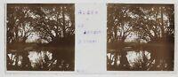 Algeri Giardino Prova Algeria Foto n2 Placca Da Lente Stereo Avril 1903
