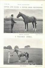 1896 carrera de caballos irlandés Golden presente Corazón Rojo Nuevo Hall Stud holandés Rollo