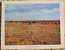 1955 Élevage dans le Sahel de Kairouan Tunisie Afrique art print affiche poster