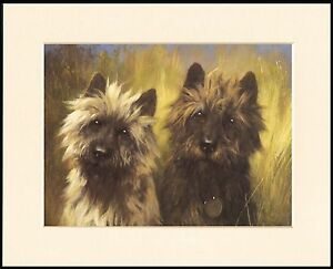 CAIRN TERRIER GREAT HEAD STUDY PRINT TWO DOGS MOUNTED DOG PRINT READY TO FRAME