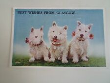 Cute Westies West Highland White Terriers+Glasgow Vintage Multiview PC  §A2246