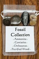 Fossil Collection Ammonite Goniatite Orthoceras Petrified Wood