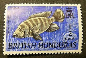BRITISH HONDURAS 1968 SG276 ½c. MOZAMBIQUE MOUTHBROODER -  MNH