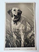 Vintage Postcard - Animals - Yellow Labrador Retriever - Masons