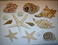 Tatouage Seashells peel and stick Dry rub Transfer
