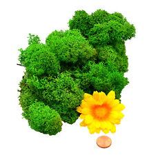 Muwse Islandmoos Köpfe V 4-12cm 25g Gras-grün handgereinigt Moos Büsche Bäume