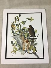 Vintage Print Broad Winged Hawk Bird Audubon's Book of Birds of America LARGE