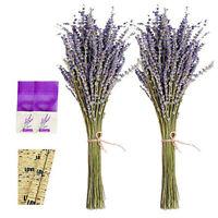 Natural Lavender Bundles Lavender Bunch Dedroom Decorative Dried Flower #AM8