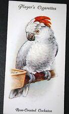 Rose Crested Cockatoo       Original Vintage Colour Card #  VGC