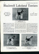 LAKELAND TERRIER OUR DOGS OLD 1948 DOG BREED KENNEL ADVERT PRINT PAGE