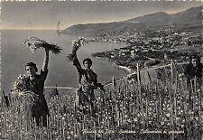 BR19408 Riviera dei Fiori S Remo plantation d oeillets italy