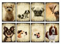 Dogs Set Glossy Finish Card Toppers - Crafts Embellishment