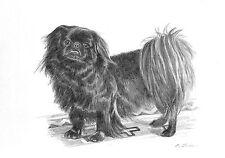 Black Pekingese Dog B/W Pencil Art Print in 8x10 Mat from Drawing by P. Tarlow
