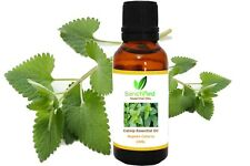 Catnip Oil/Nepeta cataria Essential Oil 100% Pure Natural For Hair Care
