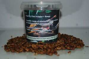 FMF Dried Silkworm Pupae For Koi Carp Fish Birds & Reptiles Approx  730g Tub