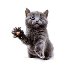 Flash Einmal Temporary Klebe Tattoo Katze Grau Blau Party Geschenk Strand Neu