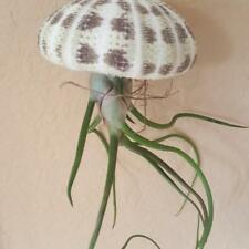 Air Plants - Jellyfish / Single Hanging Tillandsia with Alphonse Sea Urchin