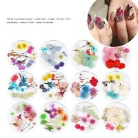Mixed Dried Flowers 3D Nail Art Stickers DIY Craft Manicure Tips Decals Decor