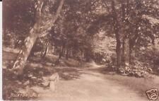 Corbar Woods Buxton Photo Postcard circa 1920